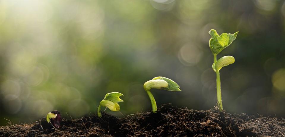 plant%202%20blog%20image