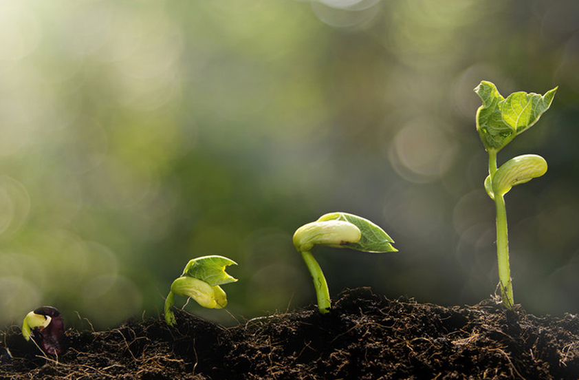 Image of Sprouting Seedling in Four Levels